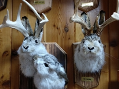 Souvenir jackalopes for sale; Wall Drug
