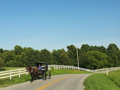Amish man with his horse-drawn buggy