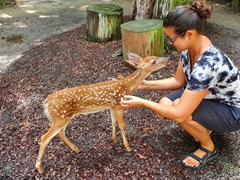 Friendly whitetail deer fawn