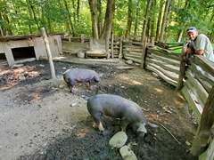 Pig pen; Oconaluftee Open Air Museum