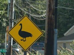 Duck crossing sign; New Jersey