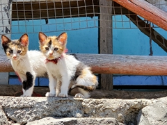 Cute kittens; Quito