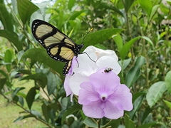 Butterfly and beetle share a flower in the Amazon