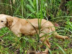 Camp puppy saying goodbye; Pequeno Paraiso