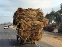 Overloaded hay truck