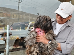 A Peruvian man shows off his shaggy dog