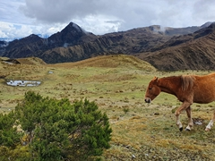 Horse grazing by the road side