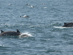 Close up of the dolphins