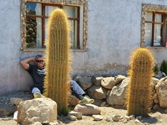 Robby and the giant cactus; Hostal Tunupa
