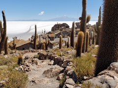 Phenomenal views of the Uyuni Salt Flats from atop Isla Incahuasi