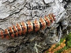 Caterpillar; Torres del Paine