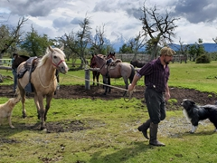 Rodrigo, our gaucho, prepares horses for an afternoon ride; Rio Serrano