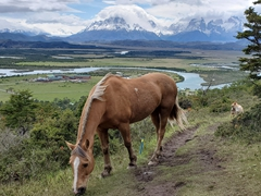 Hiking up to a viewpoint overlooking Torres del Paine National Park