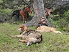 Our dogs, horses and gaucho need a rest!