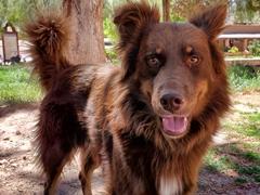 Friendly street dog; Purmamarca