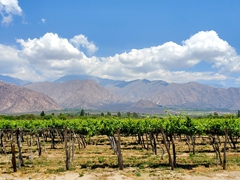 Vineyards galore in wine country; Cafayate