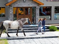 Walking her horse along the sidewalk; El Chalten