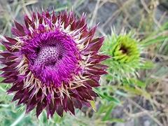 Wild flower; Cascada Cifuentes