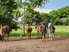 Going for a horseback ride in the Pantanal