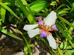 Orchid; Paraty garden