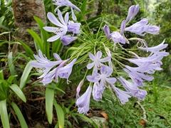 Pretty purple flowers; Teresopolis