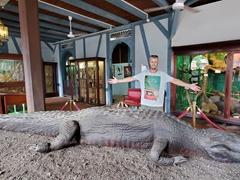 Massive alligator; Museo departamental Alexandre-Franconie