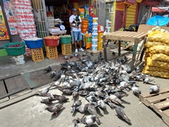 Feeding hungry pigeons; Bourda Market