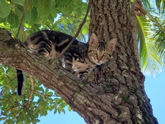 Kitten in a tree; Itaúnas