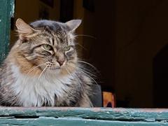 Grumpy cat; Lençóis