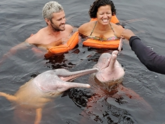 These wild pink river dolphins know where to score a free meal! Once they are fed, they swim off in the Rio Negro