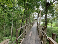 Boardwalk leading to view points on the Rio Negro