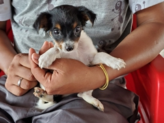 Ferry puppy; Amazon River