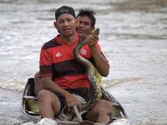 Villagers trying to lure tourists to take photos with a captive anaconda; Rio Negro