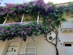 Gorgeous flower filled balcony; Cartagena