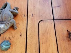 Lizard door knocker