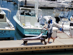 We would be much happier seeing that marlin in the water and not off a fishing boat