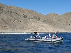 Checking out the sealion colony on Isla Santa Margarita