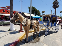Very few tourists around to hire this horse and buggy