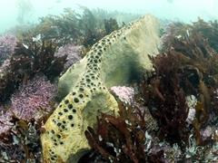 A massive sea sponge formation