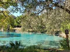 Florida is home to 700 springs and with the water at a temperate 72 degrees, it is possible to swim here year round