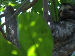 Unbelievably, Centenario Park has sloths chilling in the trees - you have to search hard to find them though!