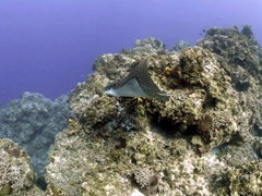On our first dive, an eagle ray glided by!