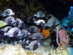 A school of fish hiding under a ledge