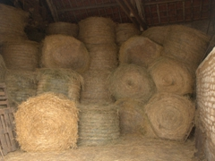 Bales of hay stacked high at the farm; Vincelles
