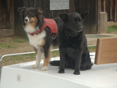 Friendly dogs cruising with their owners down the Canal du Nivernais. Check out the doggy life jacket!