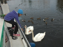 Abby befriending Auxerre's swans and ducks