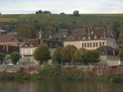 Vineyards close to the Joigny waterfront