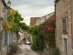 Vine archway; Noyers-sur-Serein