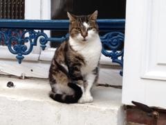 Joigny cat