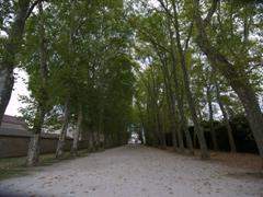 Boulevard near Château d'Ancy-le-Franc